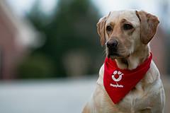 Schizoaffective-Disorder-and-Companion-Dog