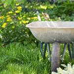 wheelbarrow in the garden